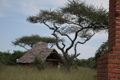 Experience an African safari with Zara Tours