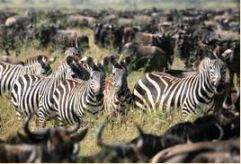 African Safari Tours - Zara Tours