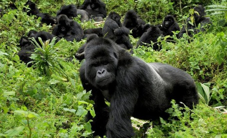 -safari-gorilla-trekking